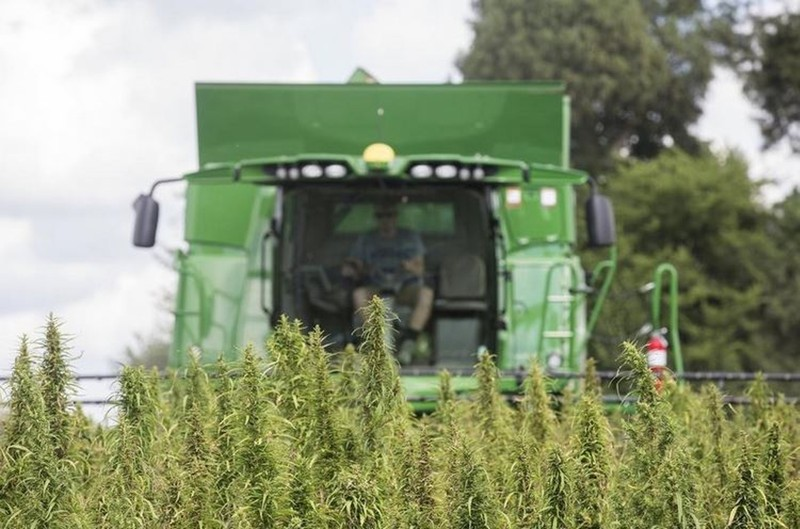 Ohio hemp growing rules approved; farmers can start later this month - Dayton Daily News