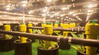 One of Colorado's Early Marijuana Pioneers Launches Hemp Company | Westword - Westword