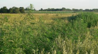 Industrial Hemp Farm News