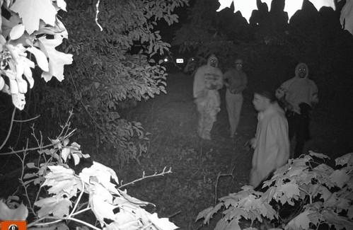Police investigating Hadley hemp thefts - GazetteNET
