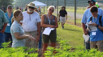 Questions Answered at First Purdue Hemp Field Day - Hoosier Ag Today