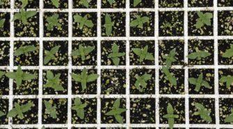 Redmond moving forward with legalizing hemp production - Bend Bulletin