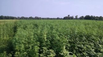 SC regulators OK pesticides for hemp production | Local - The Times and Democrat