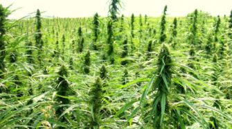 SLO County supervisors to review suggested hemp ordinance - Cal Coast News