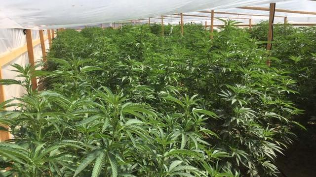 Santa Barbara County's cannabis permitting program moving but slowly