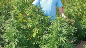 Schuylkill County hemp farmer harvests first legal grow - Citizens Voice