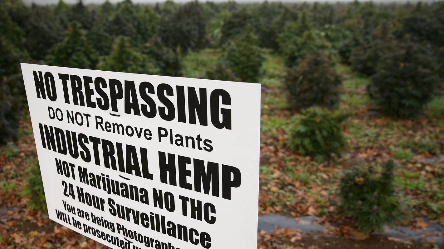South Dakota tribes plan to grow hemp, have 'big dreams' for potential revenue - Argus Leader