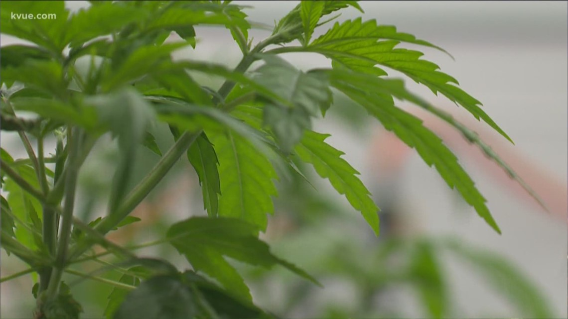 State's first hemp license issued to Killeen farmer - KVUE.com