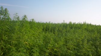 Talking Hemp With Iowa Ag Secretary Mike Naig - KIWARadio.com