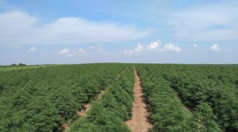 The industrial hemp market: Risk or opportunity? - Wisconsin State Farmer