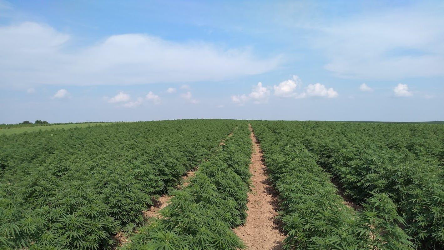 The industrial hemp market: Risk or opportunity? - Wisconsin State Farmer