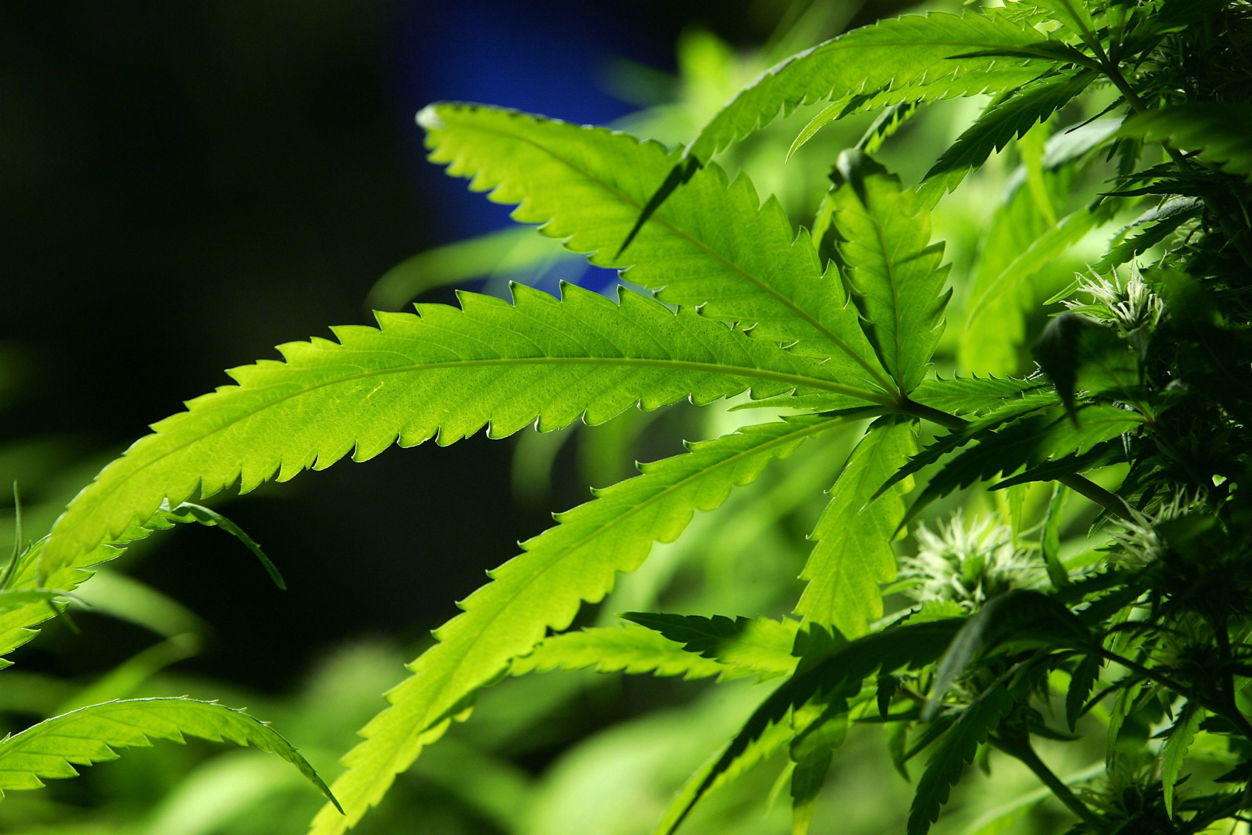 The legal hemp industry still has its challenges for growers | 1040 WHO - KFI AM 640