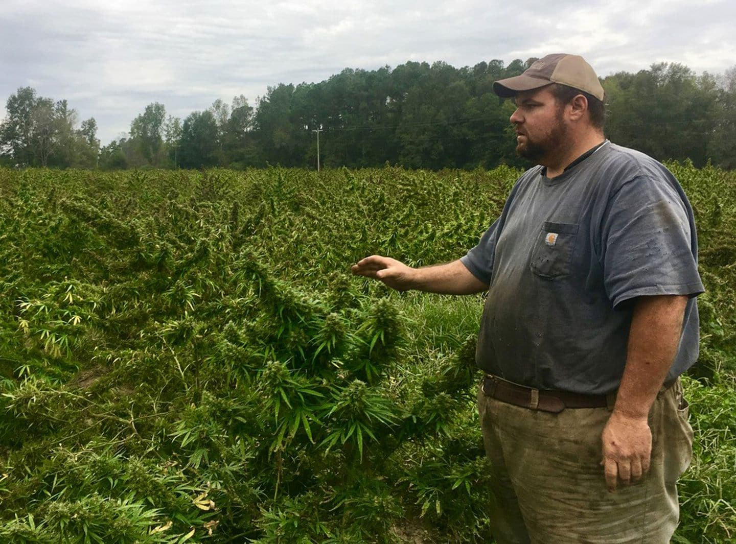 This farmer had a million-dollar hemp crop — until South Carolina bulldozed it - Washington Post