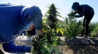 Thousand Oaks extends moratorium on new hemp businesses for 10 more months - VC Star
