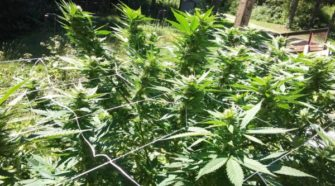 To compete in the crowded hemp field, Maine growers need to zero in on value-added products - Bangor Daily News