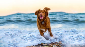 Top Five CBD treats for Your Dogs Health - Times Square Chronicles