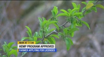 Two local farmers will be applying for hemp license to begin growing in Lee County - WZVN-TV