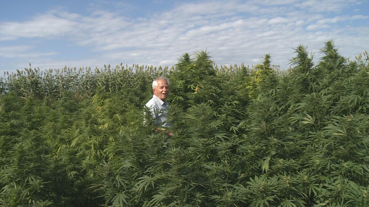 UNL industrial hemp farming research - 1011now