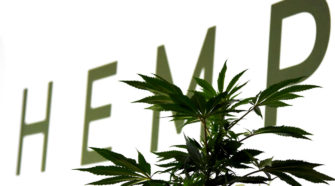 US Hemp Growers Association Launched - AgWired