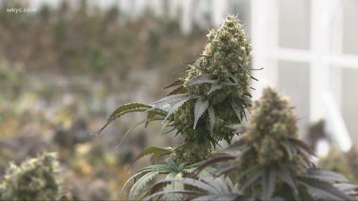 USDA OKs hemp plans for Ohio, Louisiana, and New Jersey - WKYC.com