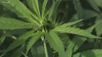 Uneven handling of hemp in Idaho cases raises questions, but few answers - KTVB.com