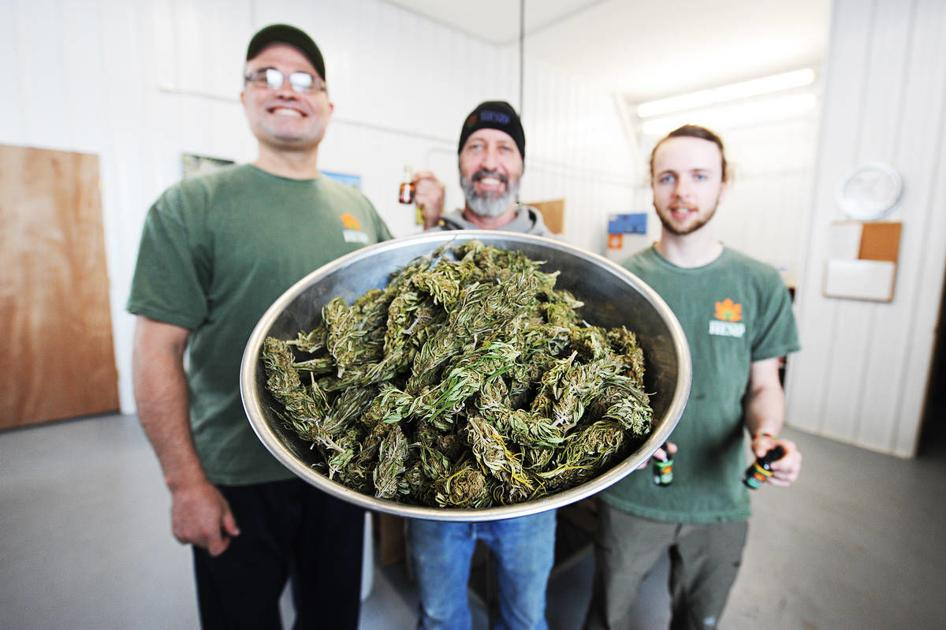 Vermont To Deploy Hemp Tracking Technology | Local News | caledonianrecord.com - Caledonian Record