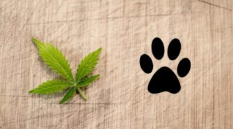 Pet hemp supplement analysis