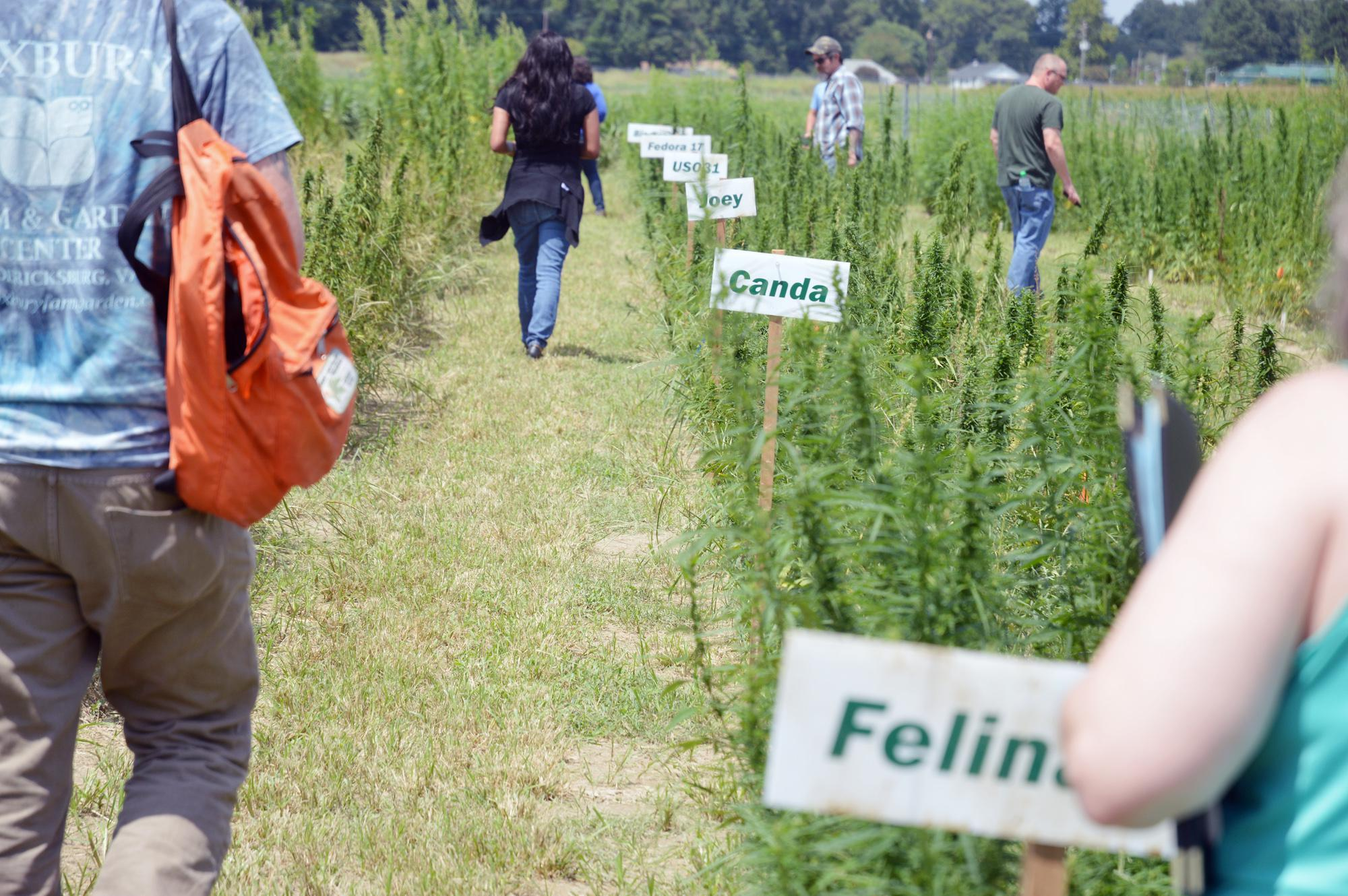Virginia hemp weathers a difficult first year - Jackson County Newspapers