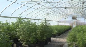 Western Colorado hemp one step ahead - KKCO-TV