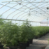 Western Colorado hemp one step ahead - KKCO-TV