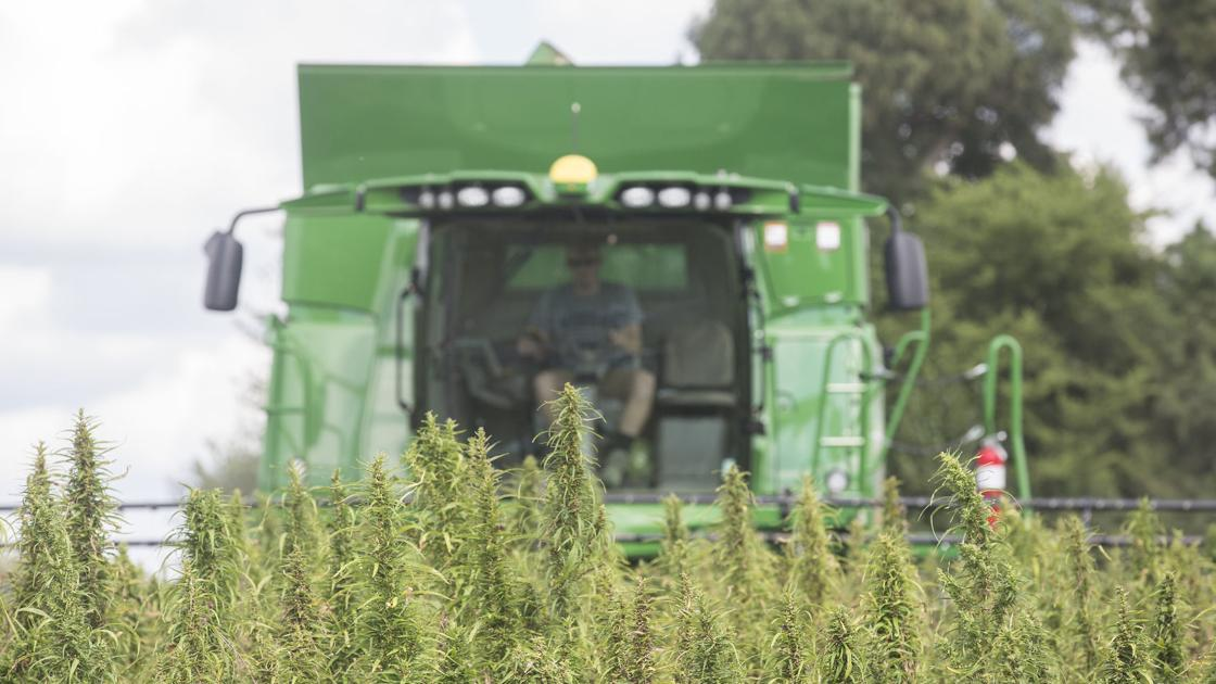 While SD waffles, most other states move ahead with hemp - Rapid City Journal
