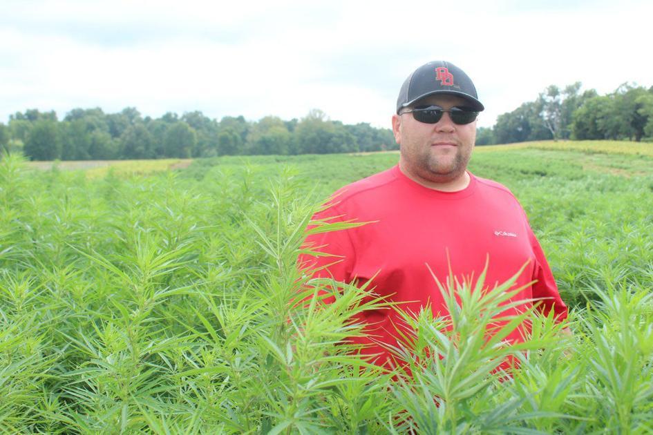 Will hemp dethrone King Tobacco in Kentucky? | Local News - messenger-inquirer