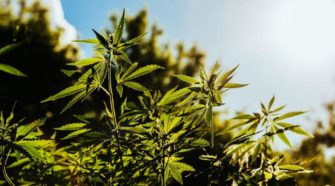 Wisconsin hemp growers want to be included in state farm relief package - The Center Square