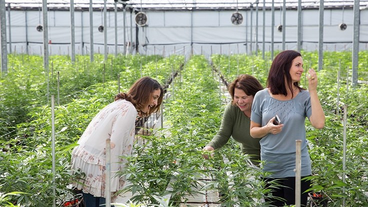 Women-Led Company Provides Cannabis Education in Carpinteria, Calif.